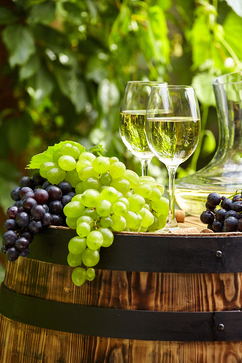 Grape and white wine on wooden barrel , garden terrace